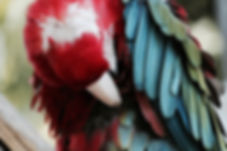 Perroquet couleurs
