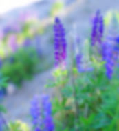 purple flowers_edited.jpg
