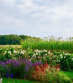 Gardens in bloom