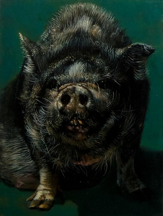 Portrait of a pig.