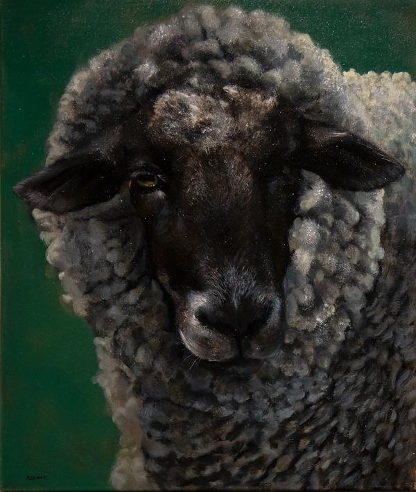 Portrait of a sheep: Matilda.