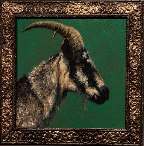 Portrait of a goat: Alistair.