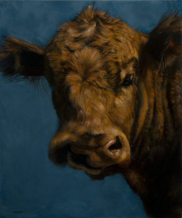 Portrait of a cow: Ellis