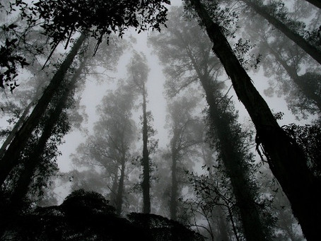 So Many National Park Mysteries—The Missing Children