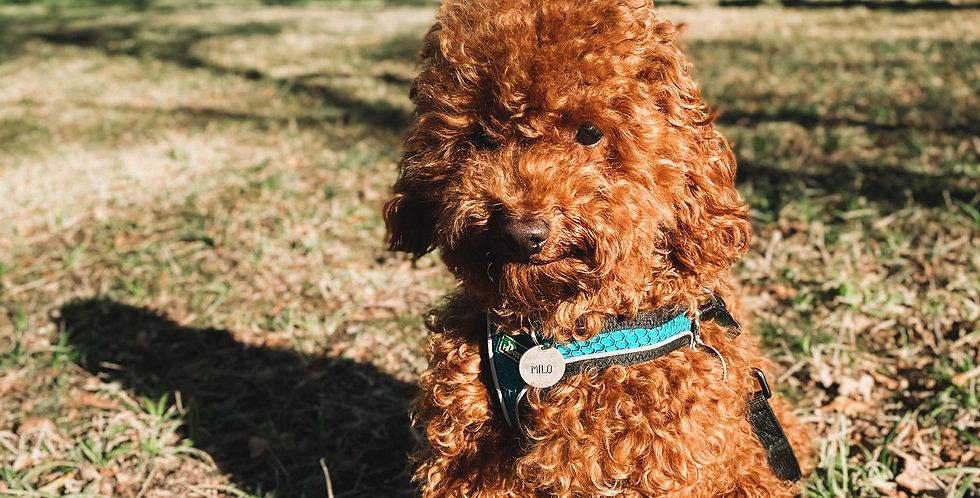 Hundemarke mit Name