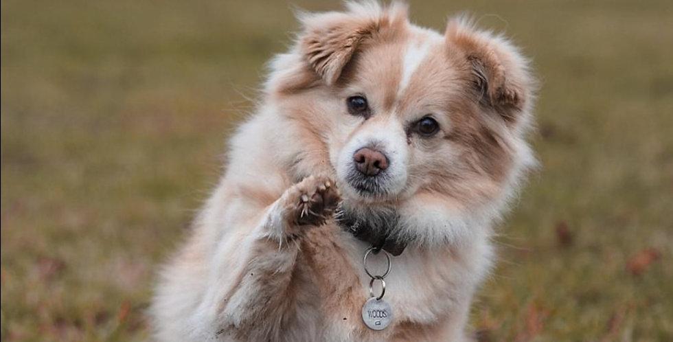 Hundemarke mit Name & Motiv