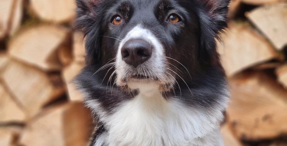 """Hundemarke""""Herzen"""" oder """"Sterne"""" mit Name"""