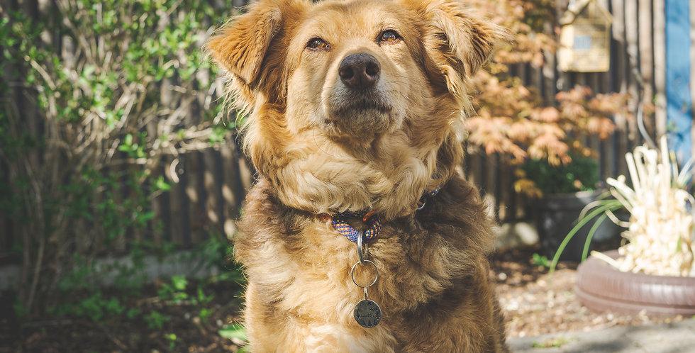 "Malias Bergseil ""Hundehalsband"""