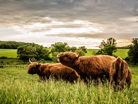 What exactly does 'grass-fed' mean?
