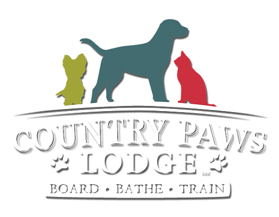 Dog and Cats Board Bathe Train