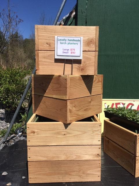 Larch Planter Boxes