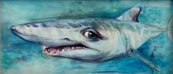 Requin qui a des yeux de poupée