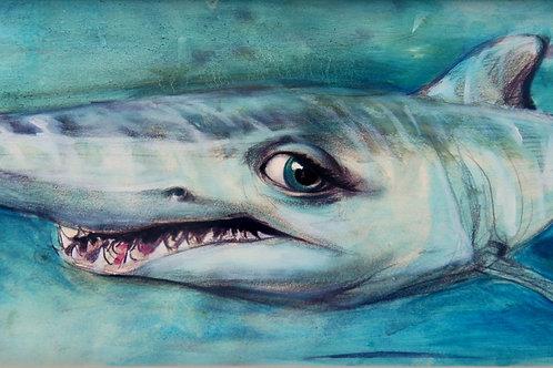 Requin avec les yeux de poupée