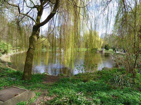 Weide im Hammer Park / Foto Anke Fricke