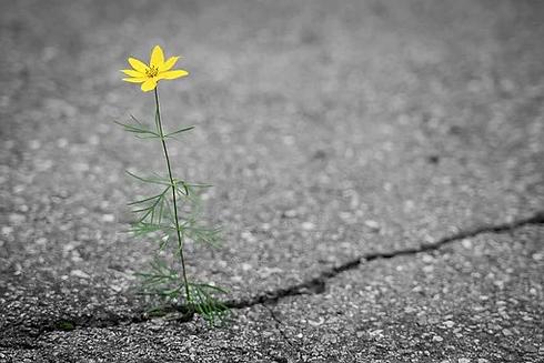 flower-4346049__340.webp