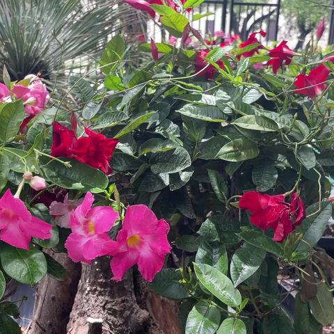 Gardening Tips From Archie's Gardenland