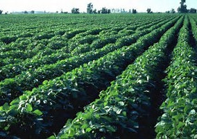Dicamba: New rules, new training