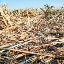 stock-photo-21192188-drought-ravaged-cro