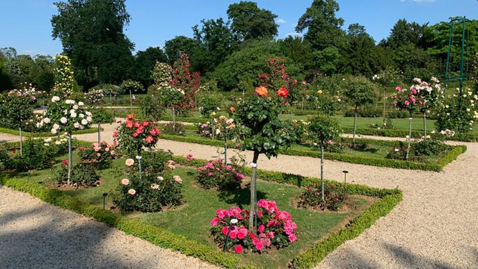 Bagatella Rose  Garden