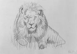Løve - A3