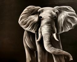 Elefant - Lerret - 100x81 cm