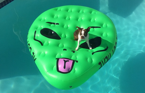 Image courtesy of https://www.thehunt.com/the-hunt/ER56cv-alien-pool-floatie-