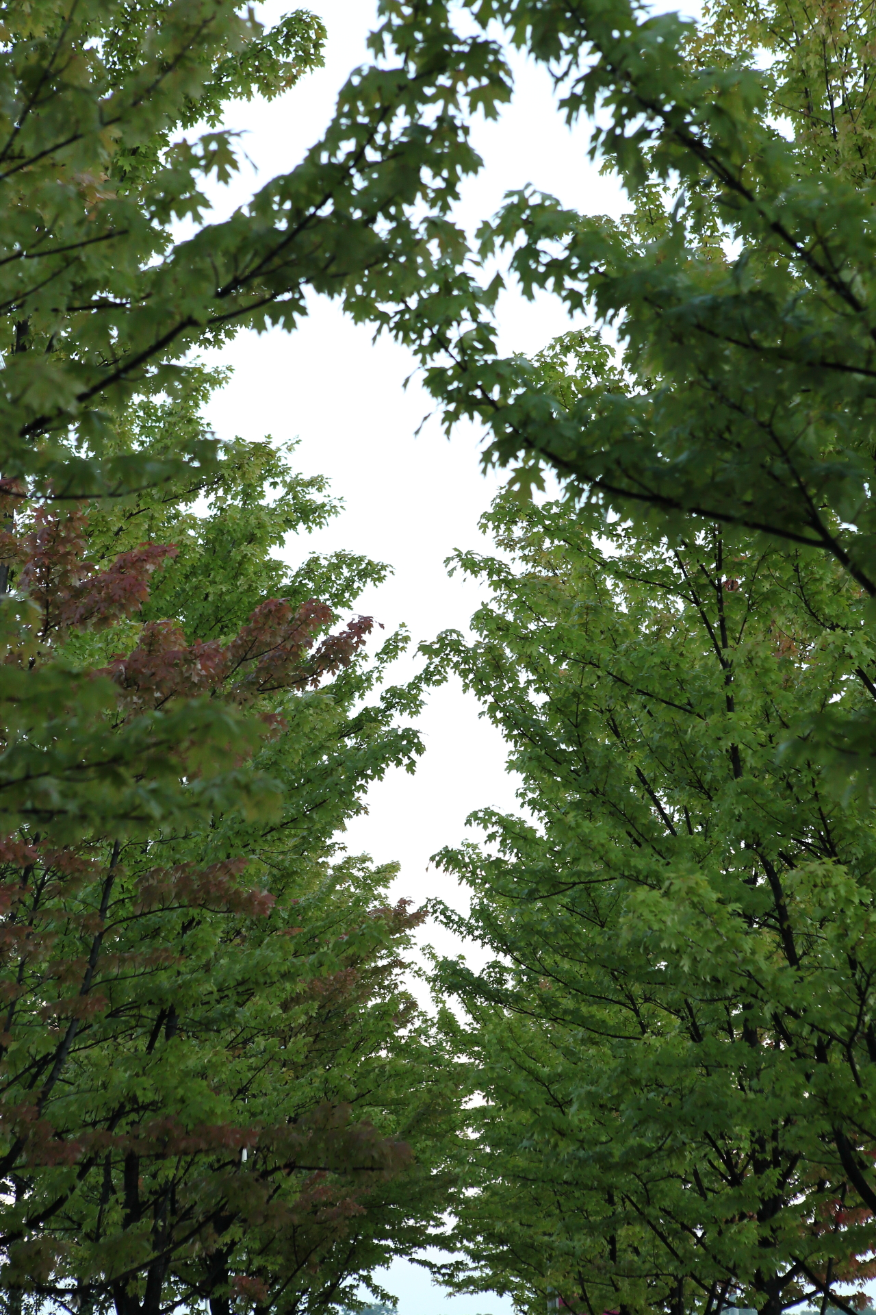 Tree  Sky Line