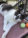 Walt's Cat Puffer.jpg