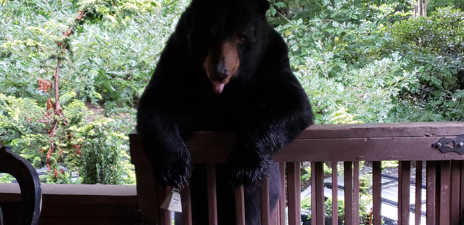 Tobie. Black Bear, NC.jpg
