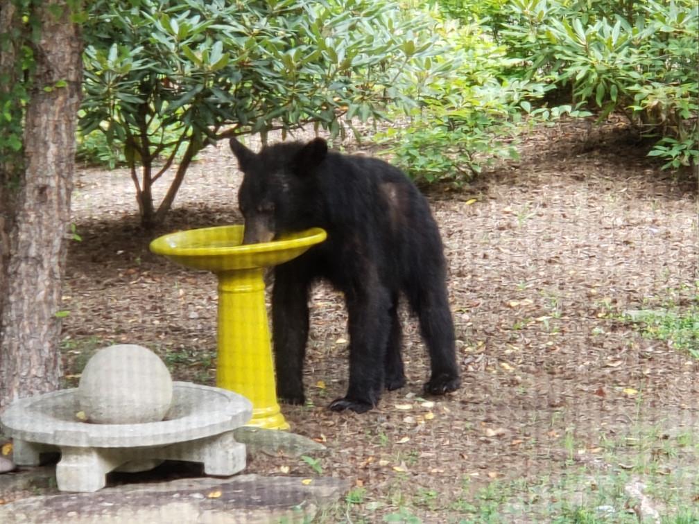 Mama Bear Before Healings