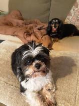 Pets-I-help-Daisy-&Romeo