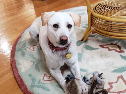 Healing your pets +  Honoring all new life in spring
