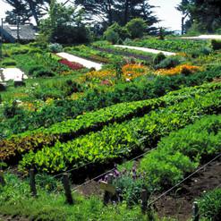La permaculture a toutes les sauces