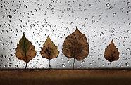 капли на стекле с листьями
