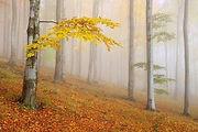 мастер-класс по батику Юлии Смирновой осенний пейзаж батик фотореализм, туманный пейзаж батик, мастер класс горячий батик, мастер-классы батик Раменское