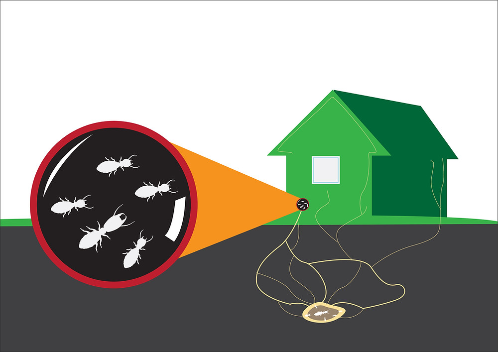 Ants entering home vector