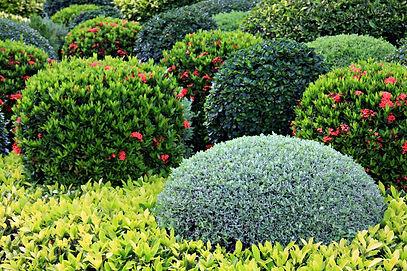 shrubs spraying service, Pest Control, Pest Control Company, Pest Control Daytona Beach, Pest Control Ormond Beach, Pest Control Company Daytona Beach, Pest Control Company Ormond Beach