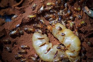 Ant removal services Daytona Beach, Pest Control, Pest Control Company, Pest Control Daytona Beach, Pest Control Ormond Beach, Pest Control Company Daytona Beach, Pest Control Company Ormond Beach