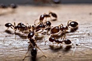 Ant pest control service, Pest Control, Pest Control Company, Pest Control Daytona Beach, Pest Control Ormond Beach, Pest Control Company Daytona Beach, Pest Control Company Ormond Beach
