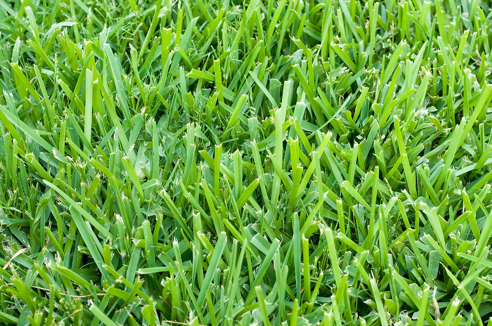Lawn Turf Imperial Pest Prevention