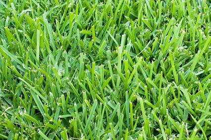 lawn aeration service Florida, Pest Control, Pest Control Company, Pest Control Daytona Beach, Pest Control Ormond Beach, Pest Control Company Daytona Beach, Pest Control Company Ormond Beach