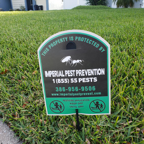 What Do I  Need to Know About Lawn Care in Florida