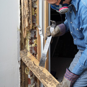 What Is a WDO Inspection?