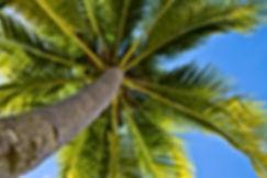Palm Tree Treatment Care