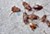 Pest Control company Daytona Beachh