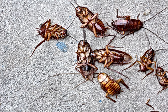 Pest Control company Daytona Beach, Pest Control, Pest Control Company, Pest Control Daytona Beach, Pest Control Ormond Beach, Pest Control Company Daytona Beach, Pest Control Company Ormond Beach