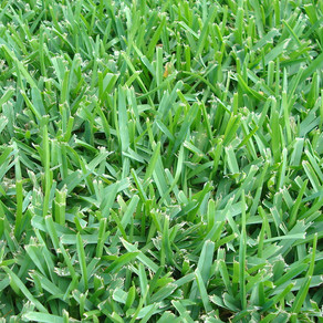 Things You Need For a Greener Lawn