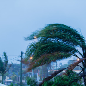 Six Ways to Keep Your Home Safe from Pests During Storms
