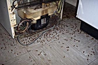 Pest Control Daytona Beach, Pest Control, Pest Control Company, Pest Control Daytona Beach, Pest Control Ormond Beach, Pest Control Company Daytona Beach, Pest Control Company Ormond Beach