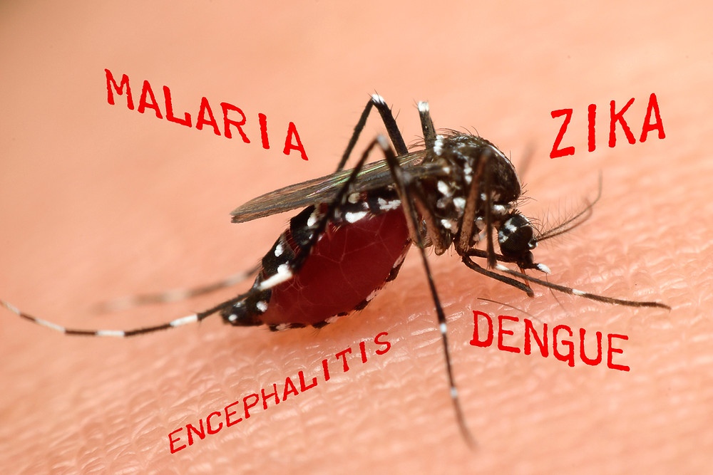 Mosquito and disease image